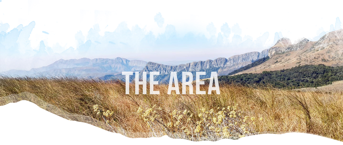 The Area Header Image