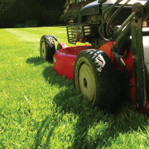 Lawn Mowing Service in DFW