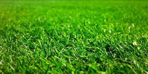 Tampa Grass Types