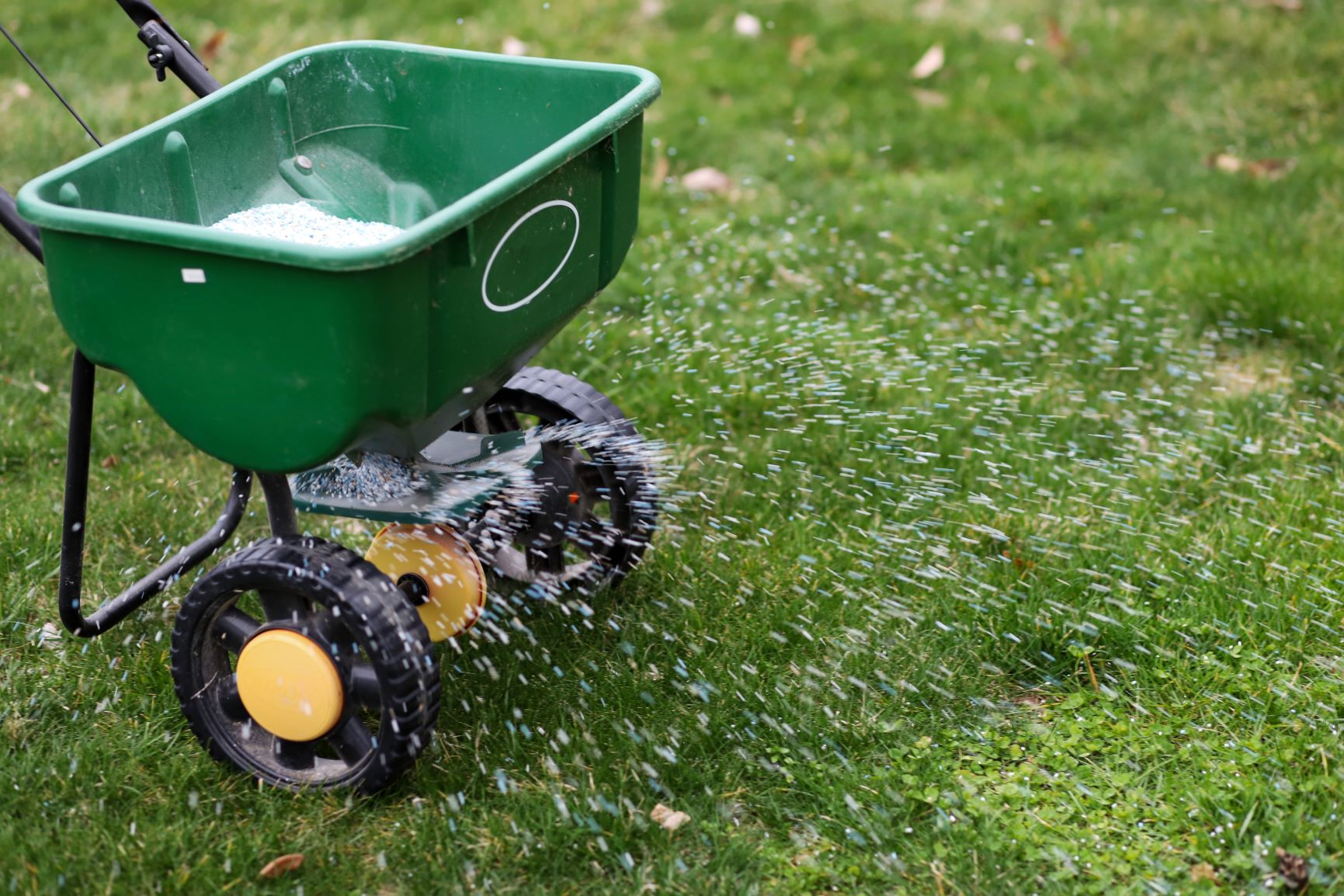 Fertilization and Weed Control: Timing and Application