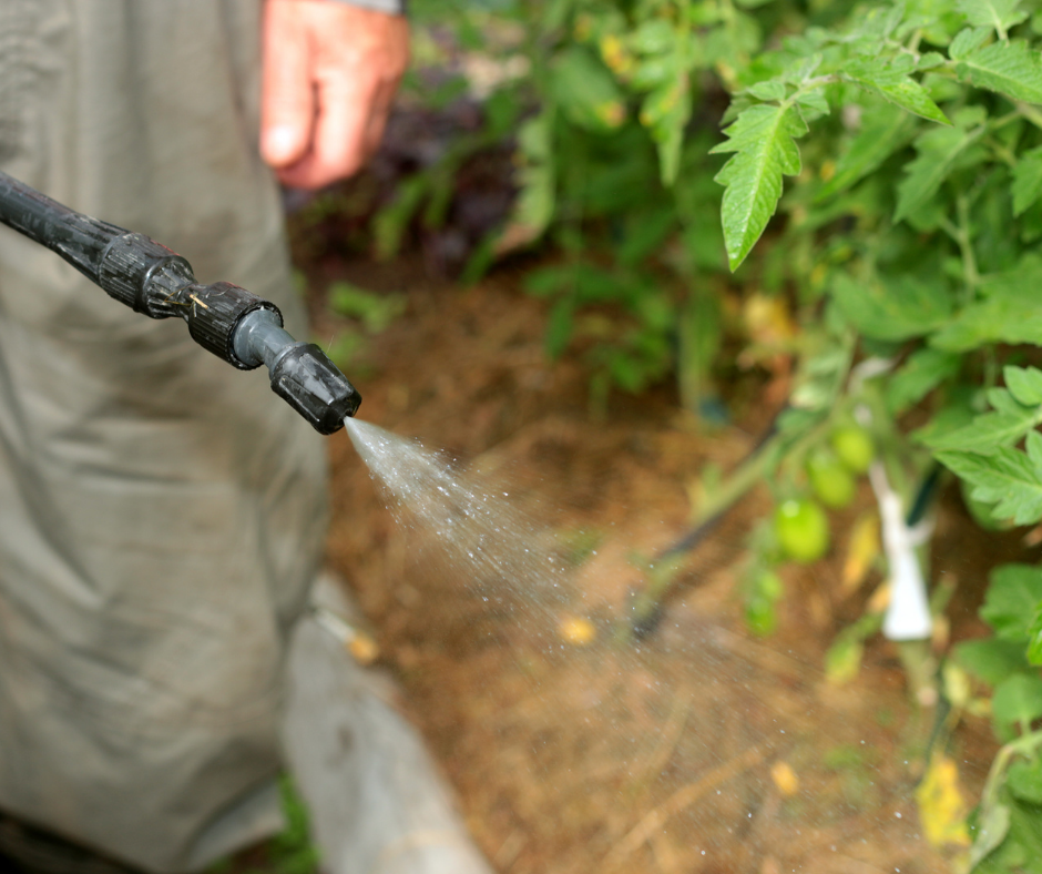 When is It Time to Spray for Mosquitoes?