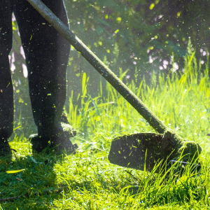 Aside from mowing and edging, the lawn service also includes weed eating all of the hard to reach areas.
