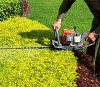 OneNeighbor offers the most affordable bush/hedge/shrub trimming service available.