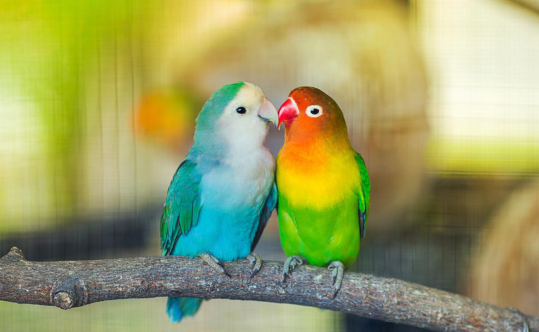 Are You Ready for a Companion Bird?