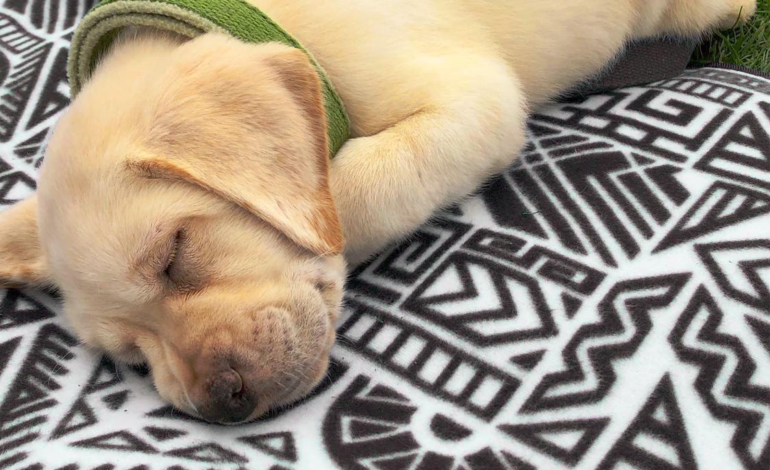 Perfect Puppy Plan
