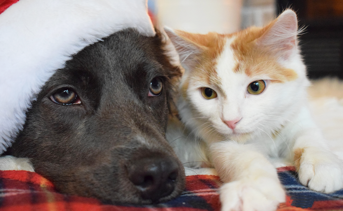 Holiday Parties and Your Pet