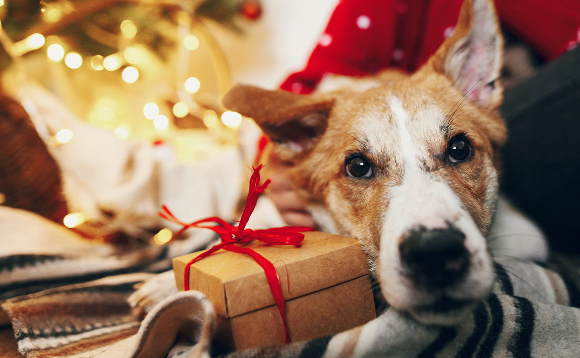Holiday Gift Ideas for Animals