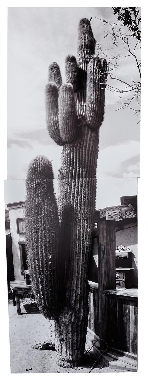 Cactus Pioneertown