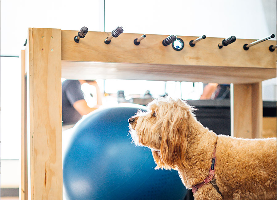 Jansy has an office dog.