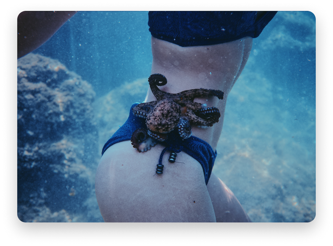 Woman in navy bathing suit, photo taken underwate, octopus on her stomach.
