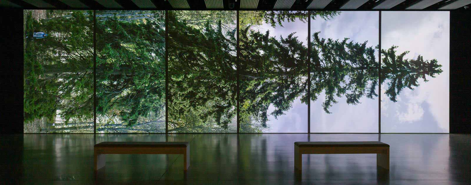 Two benches in front of an exhibition display at the Hayward Gallery, London, showing a giant projection of a tree, observed horizontally