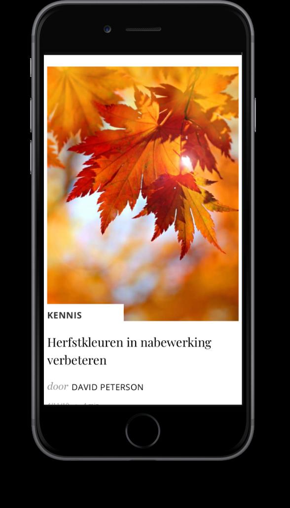 Smartphone met website voorbeeld