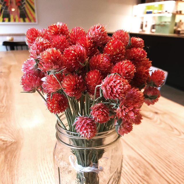 Drying flowers is a great way to bring some of the color of autumn into winter. These are gomphrena globosa from @strengthtolovefarm thanks to our pal @mayasugiyamawalsh