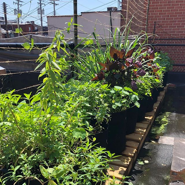 Dreaming of the return of our rooftop herb garden... thanks to @edibleedenbmore #springiscoming🌸