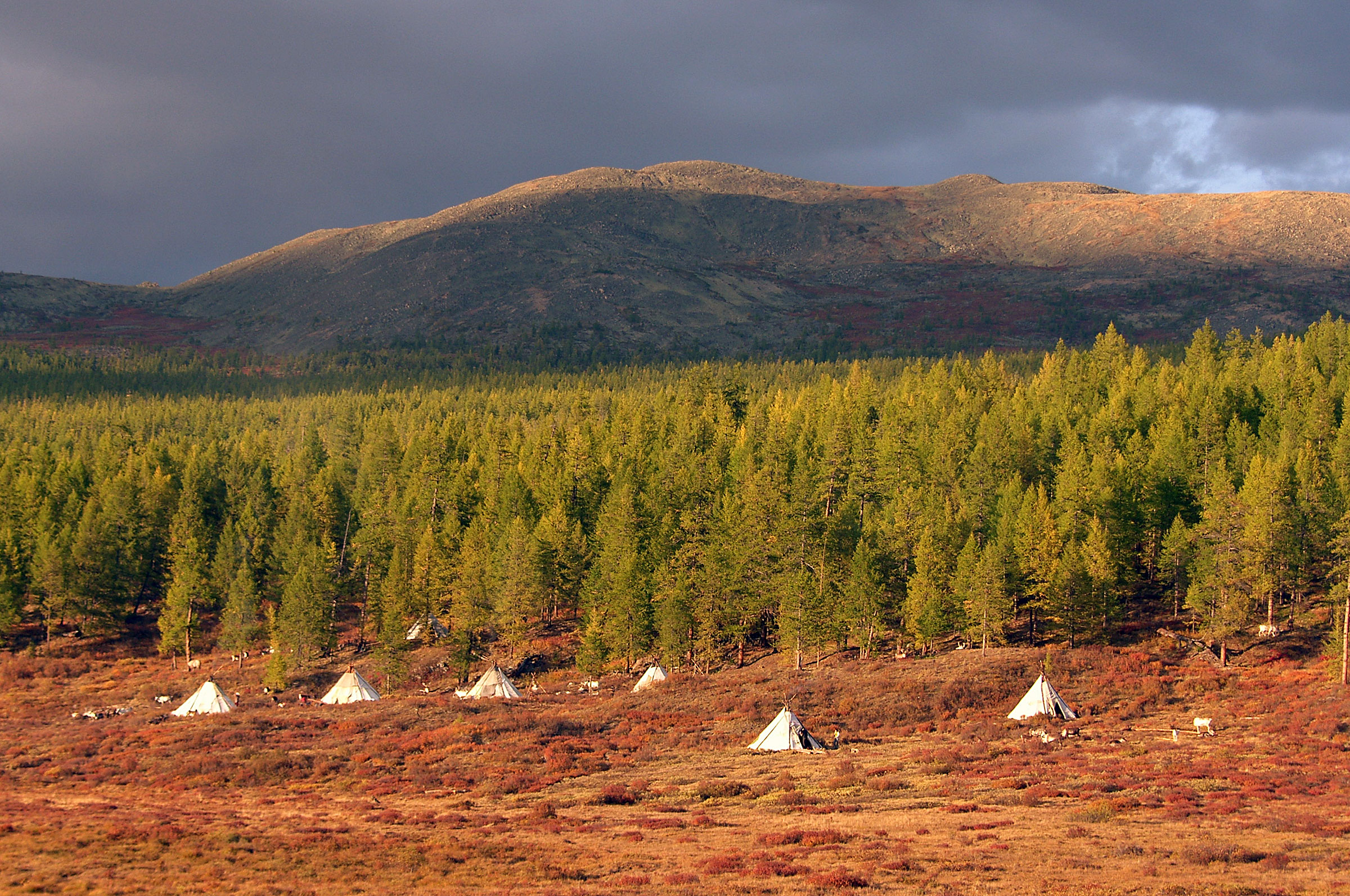 Mongolia's East Taiga reindeer herder camp. Photo Dan Bailey.