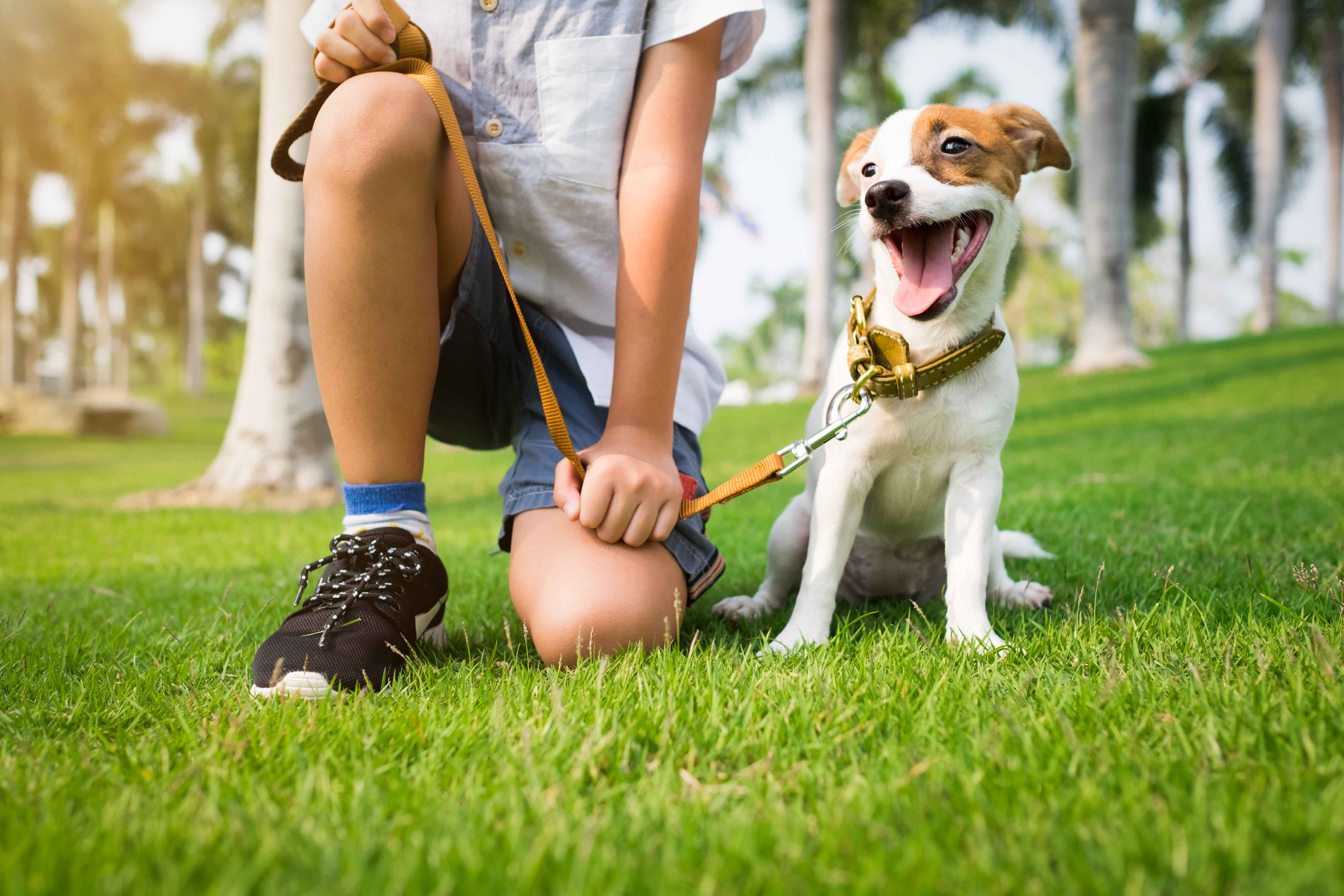 A young boy working a job as a dog walker in the summer