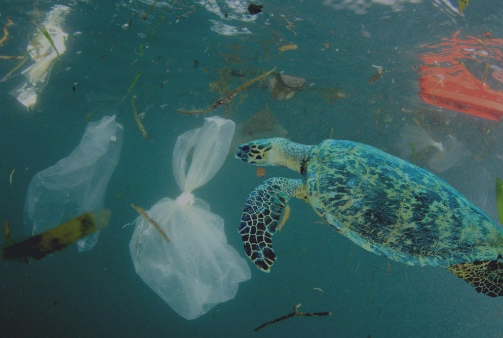 Doing Your Part To Save Our Oceans: So Hot Right Now
