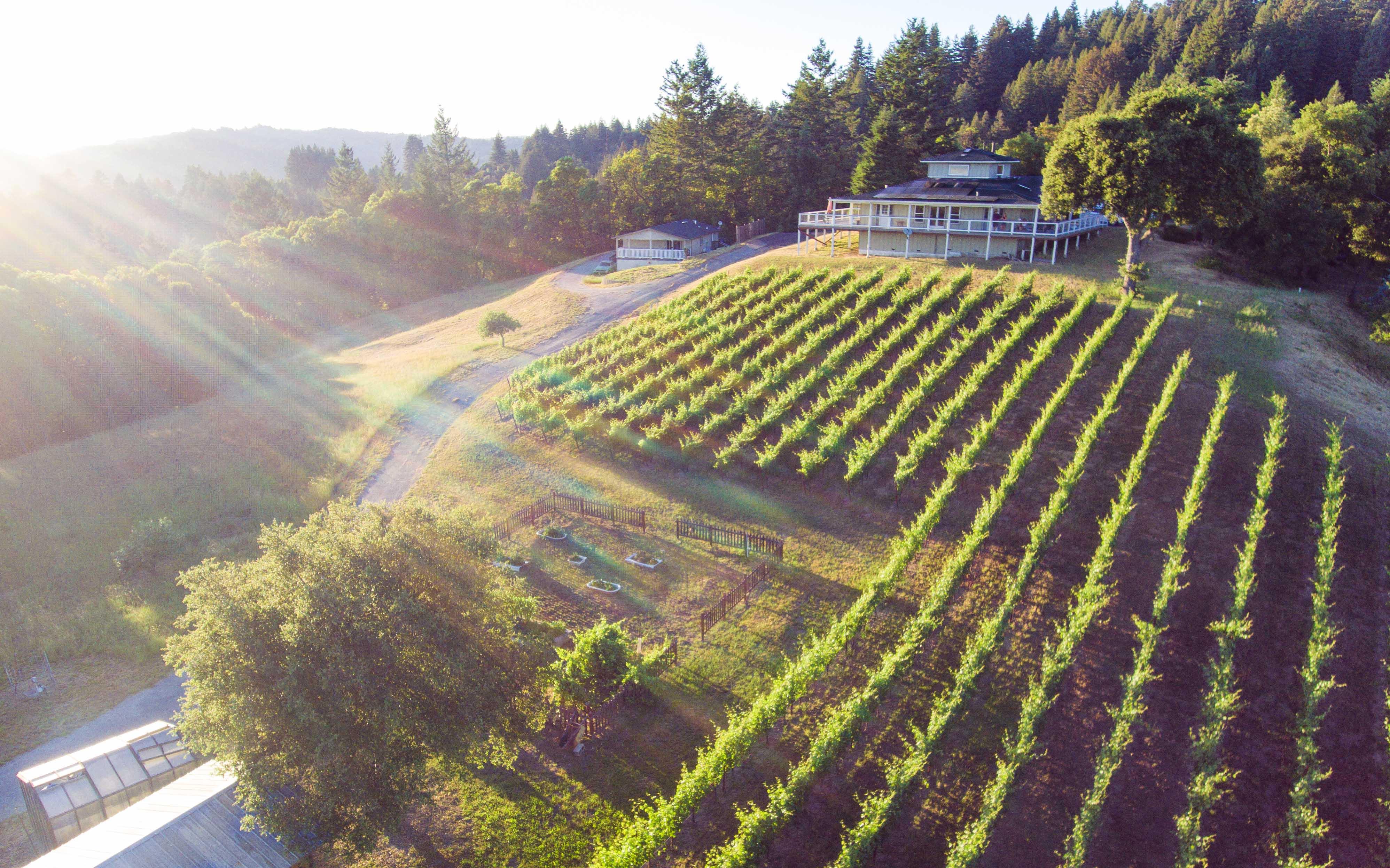 Aerial view of DaLarDi Vineyard, where Aptos Vineyard got their 2018 and 2019 pinot grapes