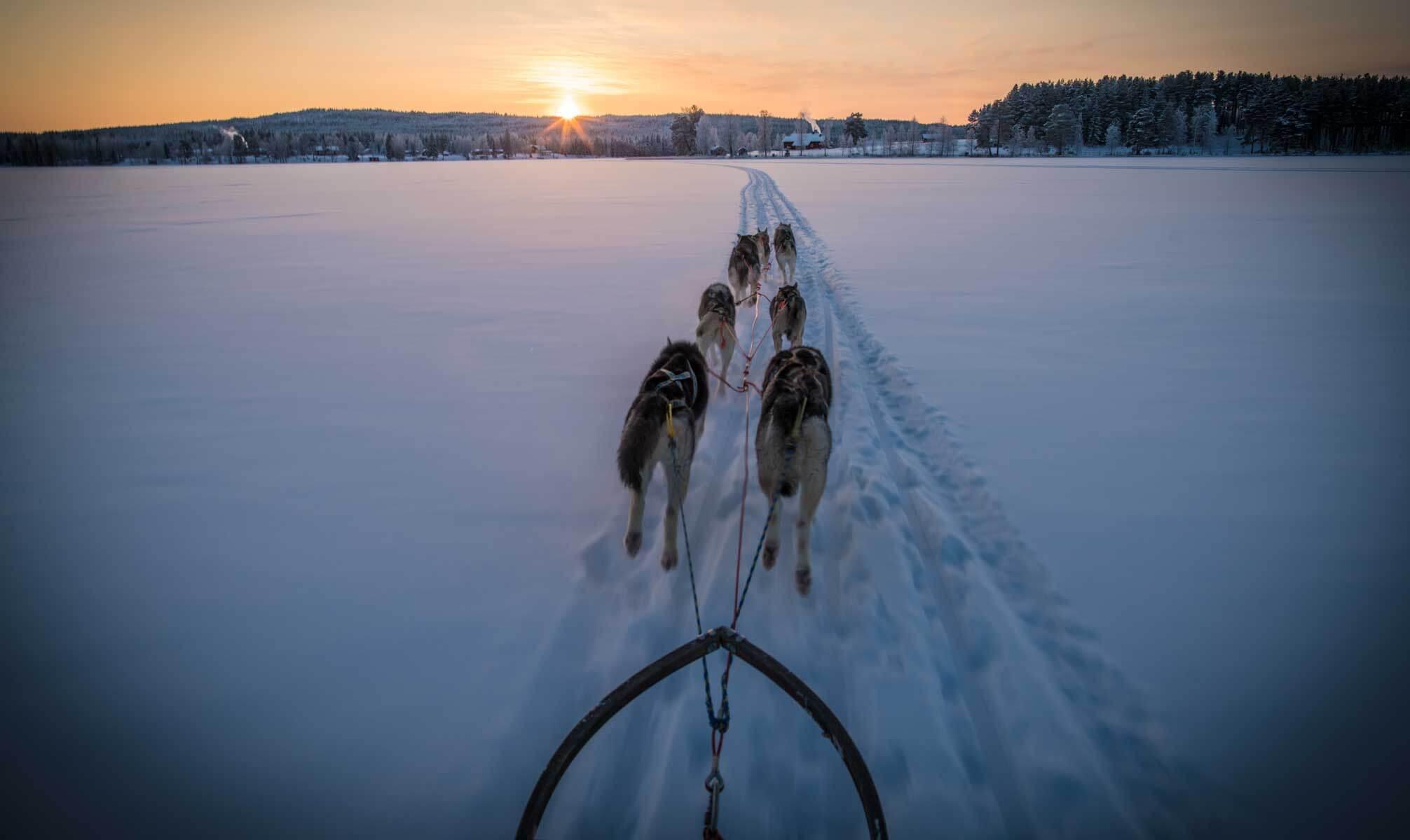 Dog sledding during sunset