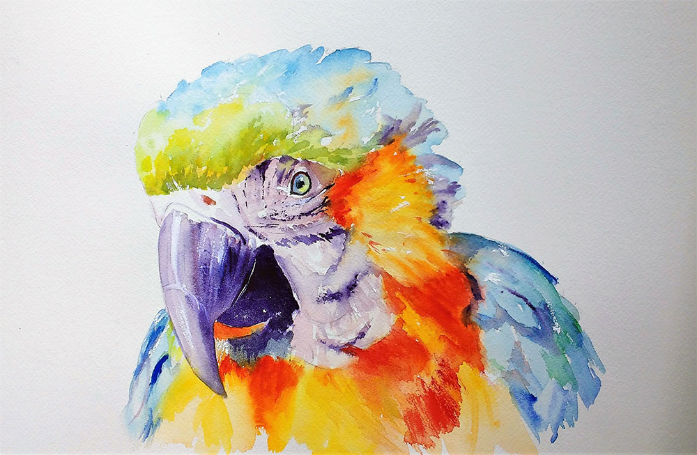 Watercolour parrot in a colourful artistic style