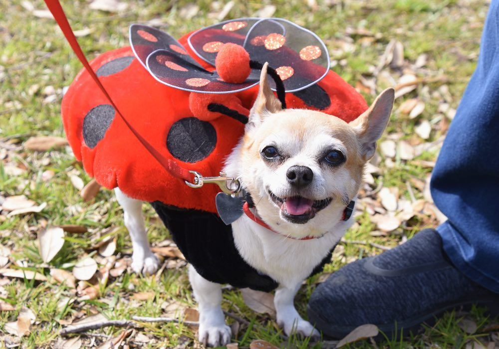 15th Annual PAWS Pet Parade