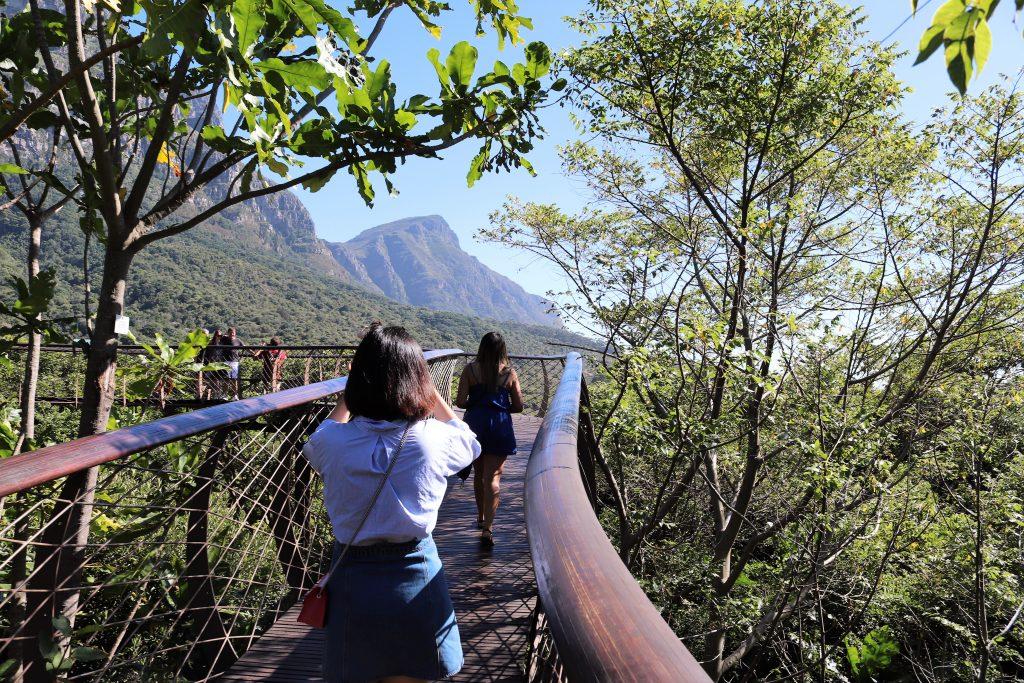 Kirstenbosch-Boomslang-bridge-Bridging-Gaps