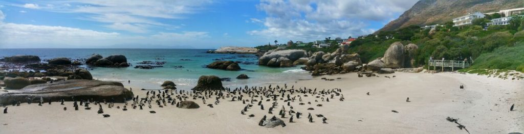 Boulders-Beach-Cape-Town-1