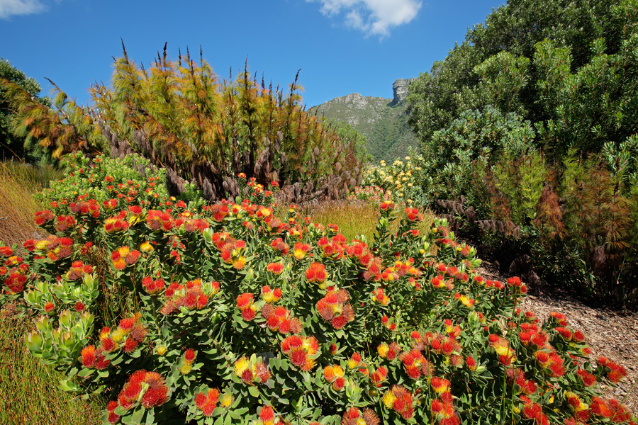 cape floral kingdom environmental science internships in cape town