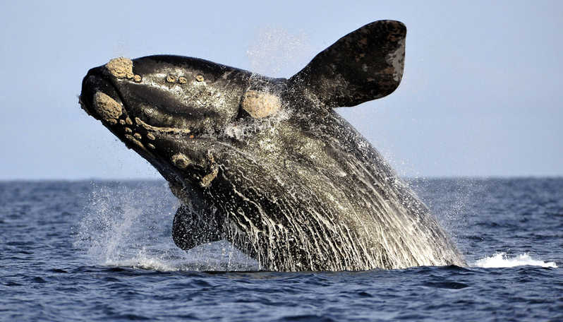 whale watching environmental science internships in cape town
