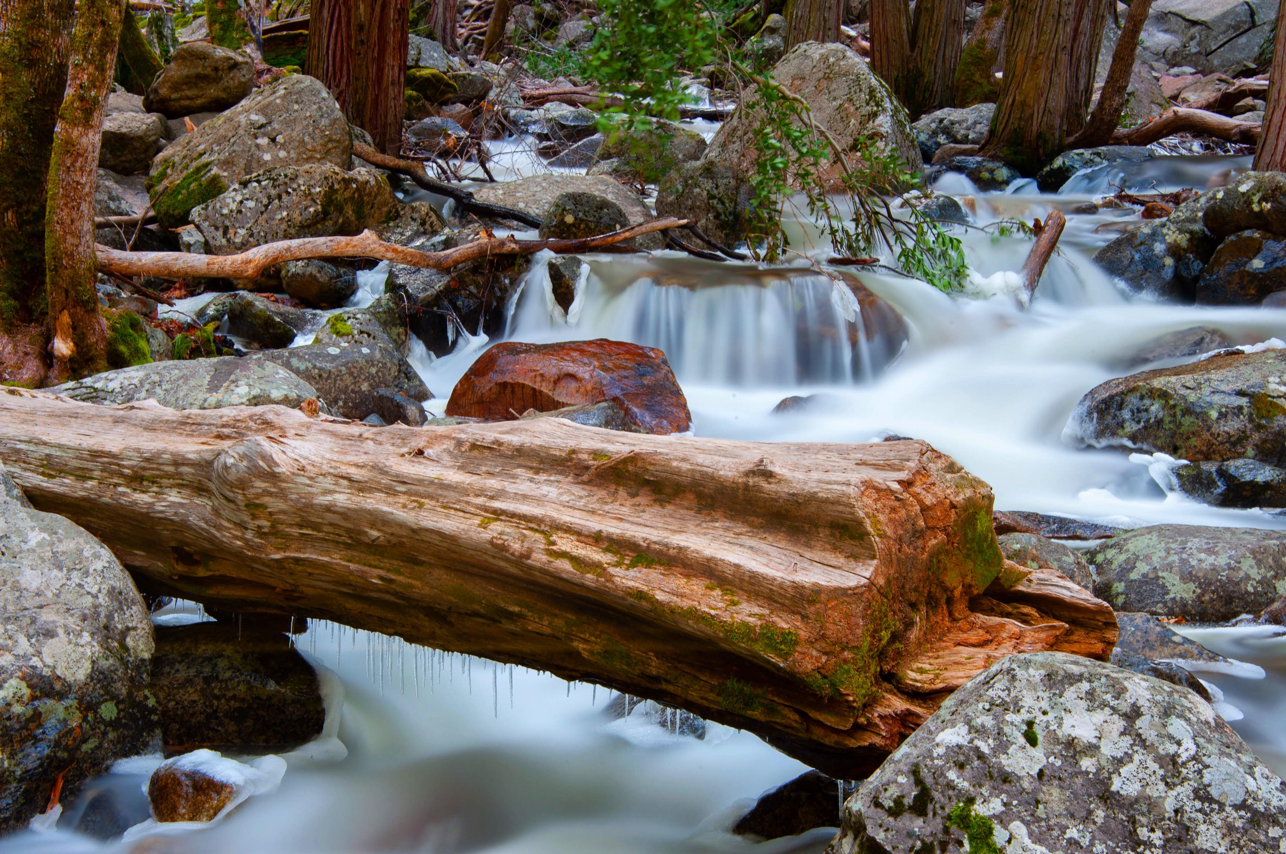 A log in the middle of a river in Yosemite National Park