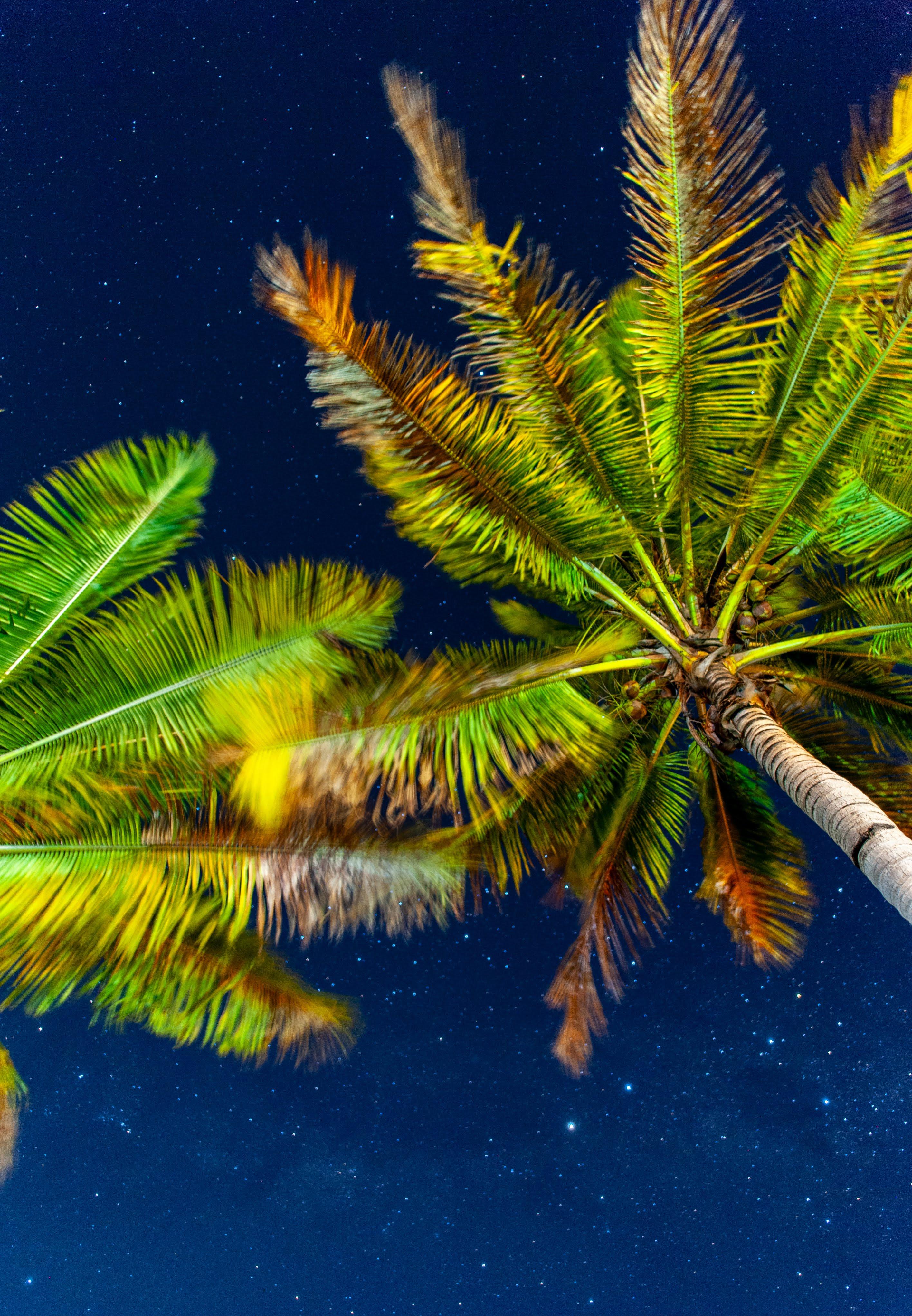 Palm trees under a starry night sky