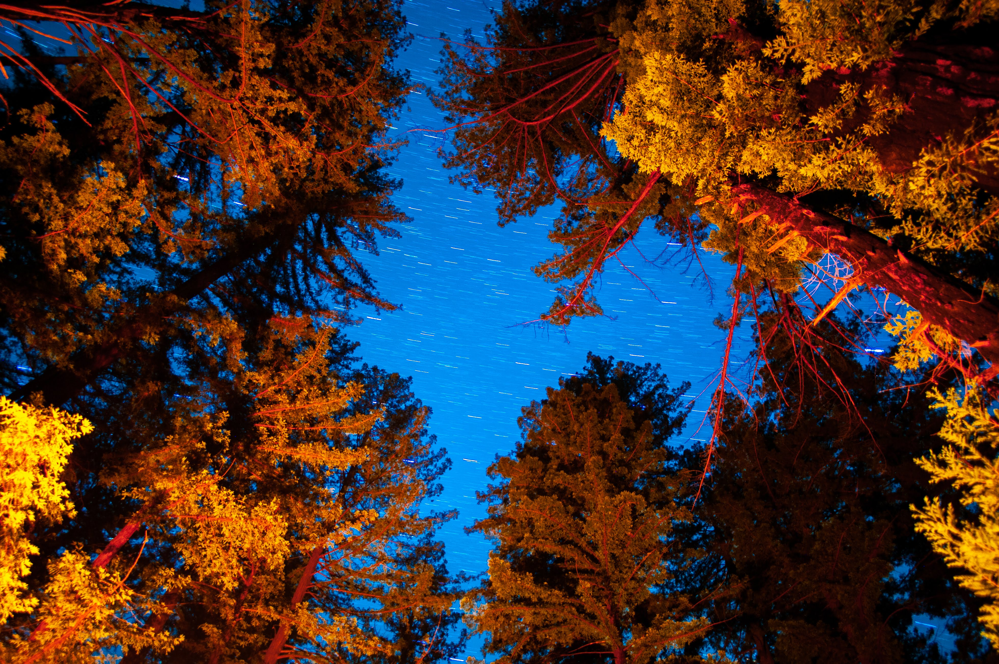 Trees lit by campfire under a starry night sky