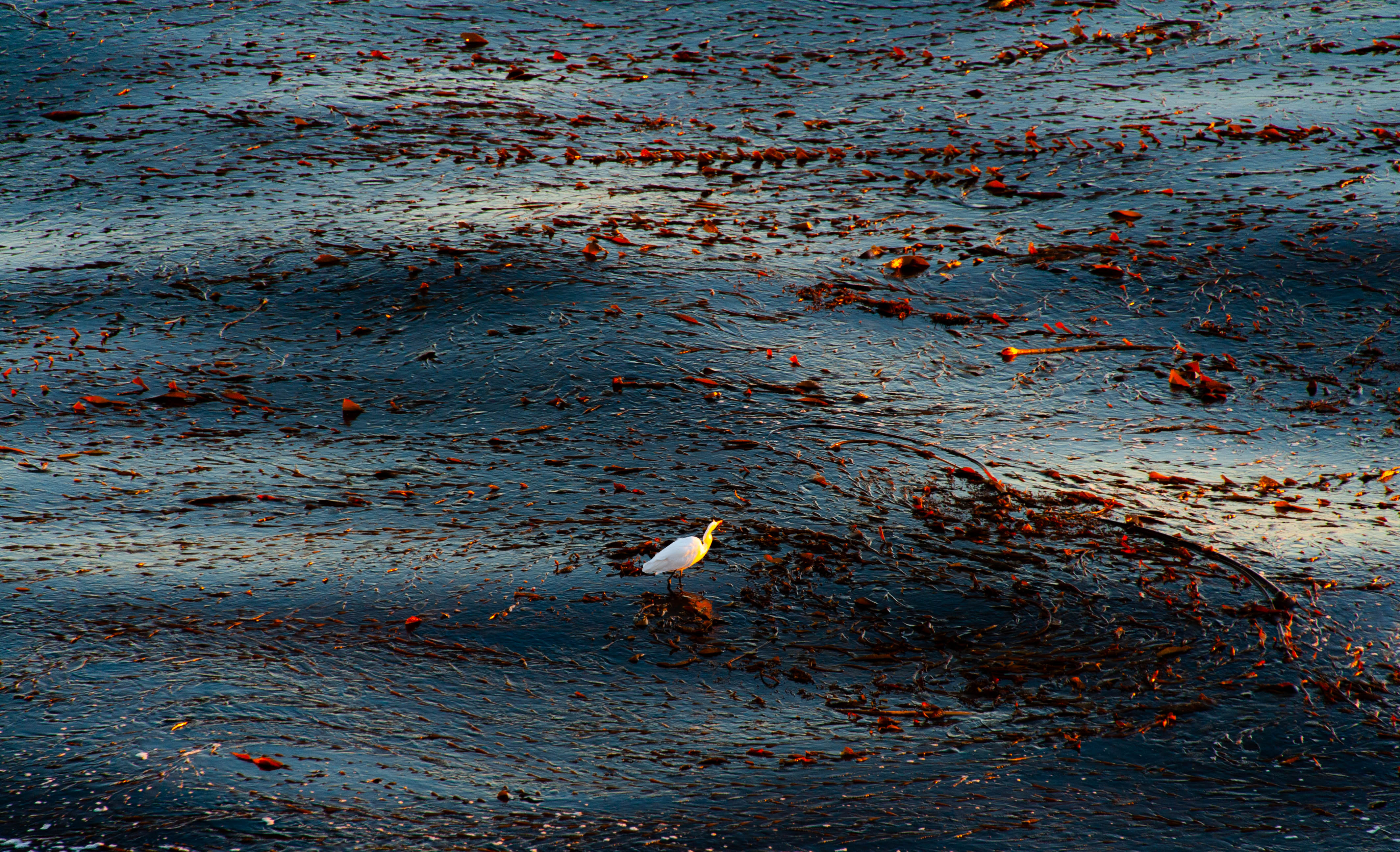 A bird sits in the middle of the waves in the Pacific Ocean