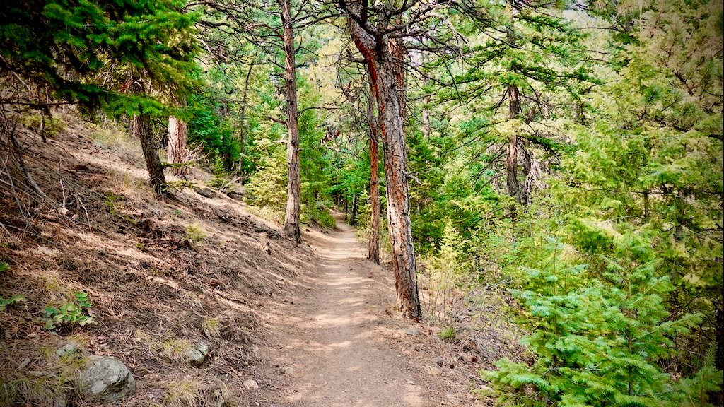 A hiking trail near Risclarity's office