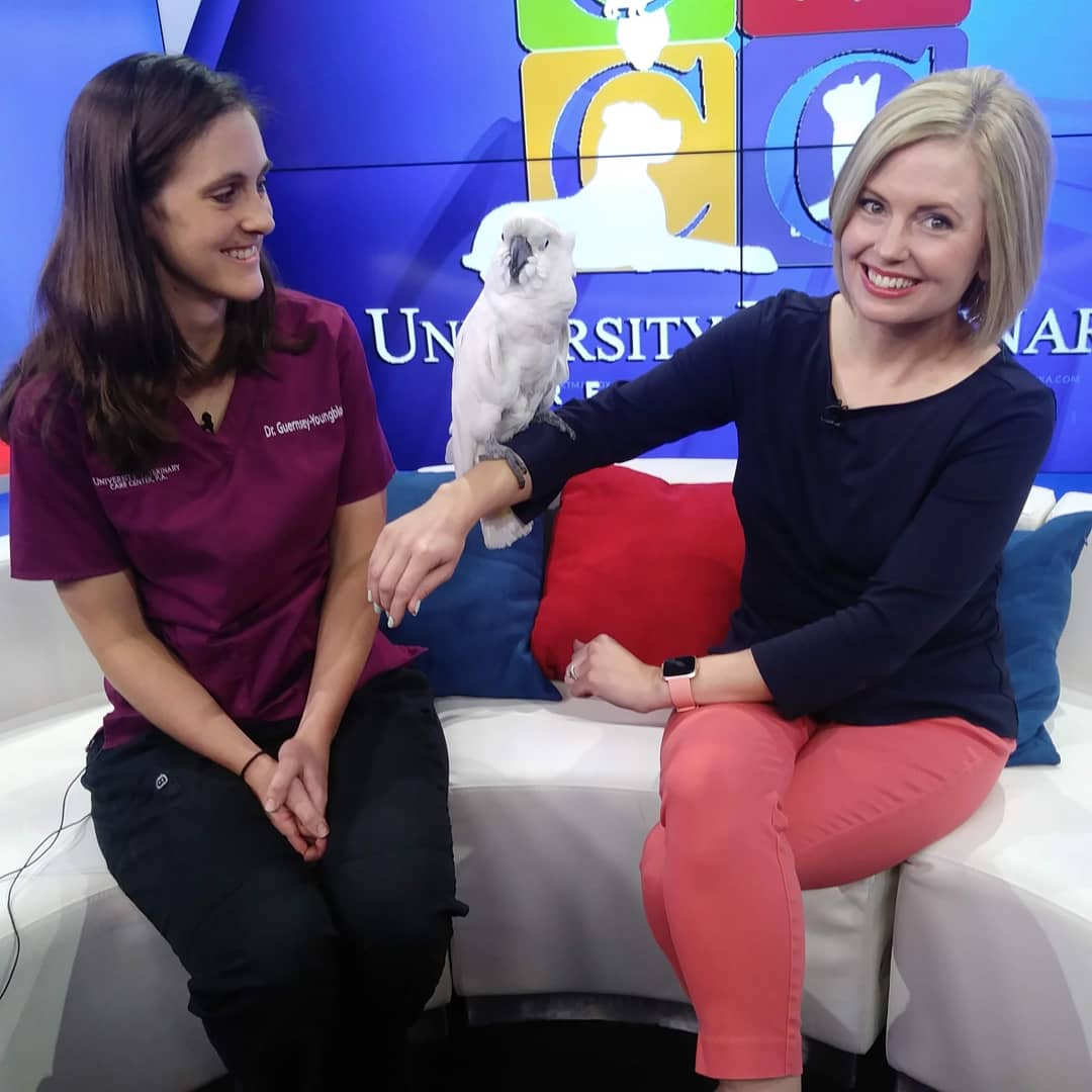 Pet Advice news segment taping