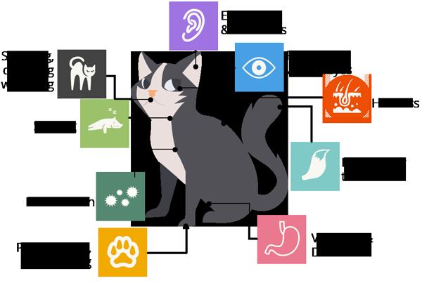 Common pet allergy symptoms