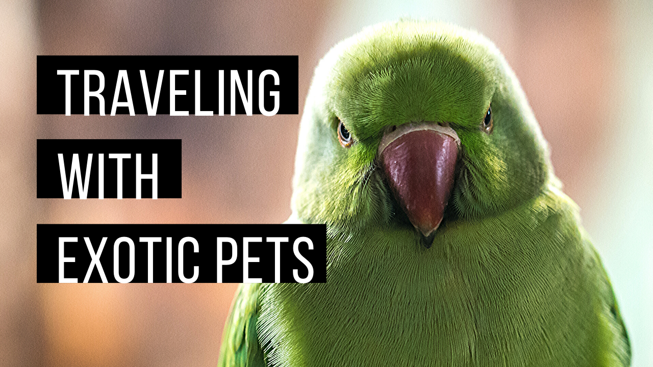 Traveling with exotic pets