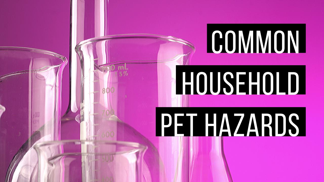 Common household pet hazards
