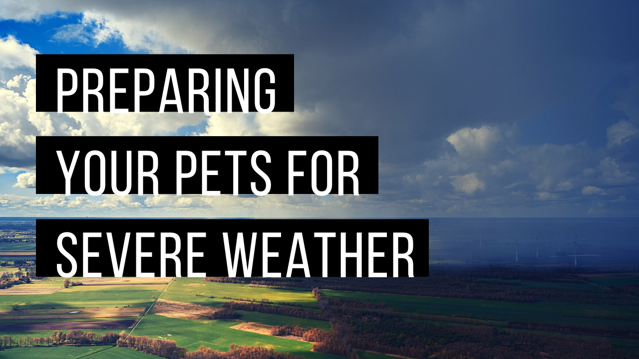Preparing your pets for severe weather