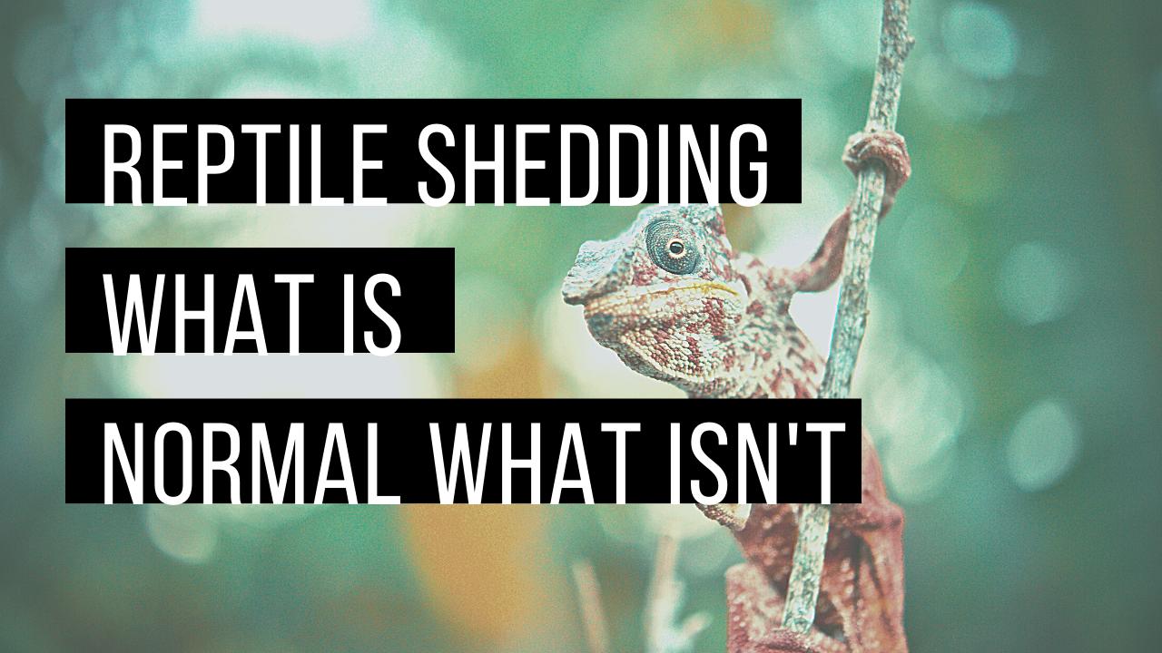 Reptile shedding