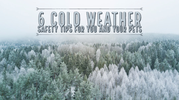 6 Cold Weather Safety Tips for You and Your Pets