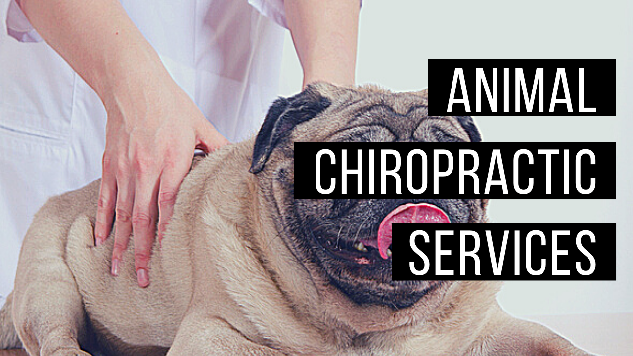 Animal chiropractic services