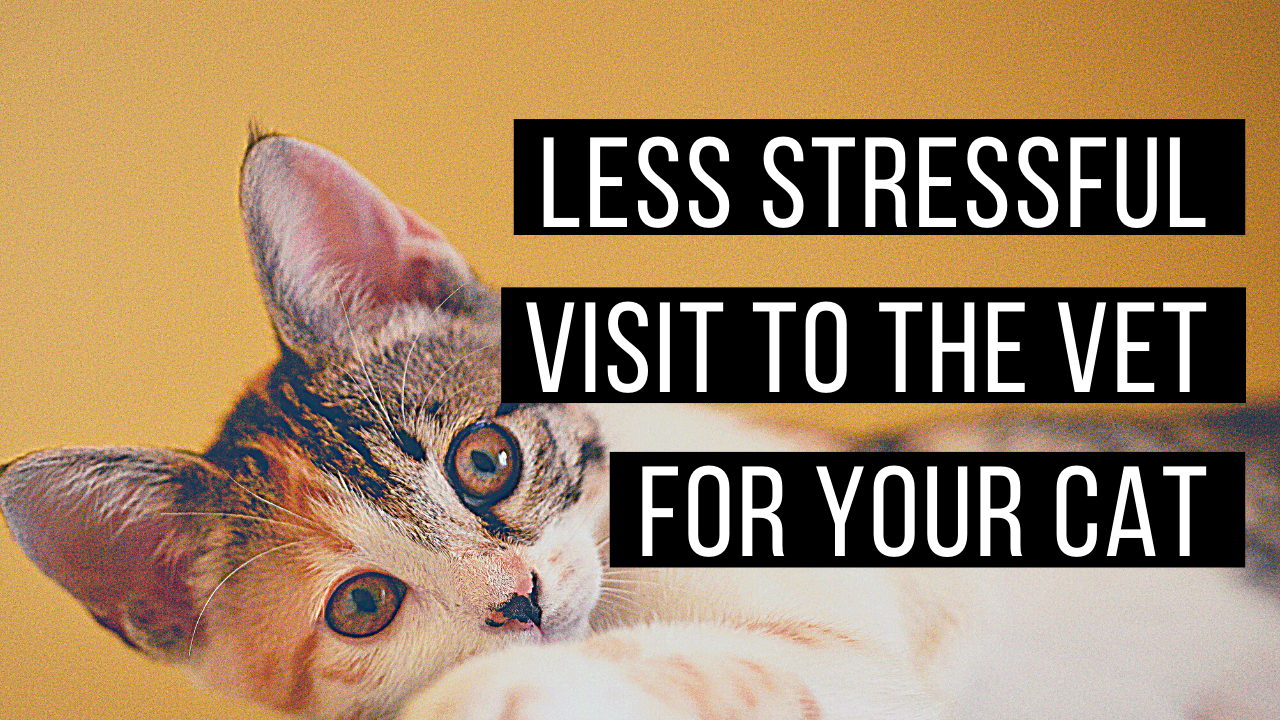 Making trips to the vet less stressful for your cat