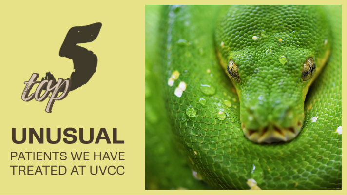 5 fun and unusual patients we have treated here at UVCC in the past 12 months