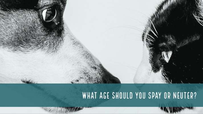 Do you know what age to have your pet spayed or neutered?