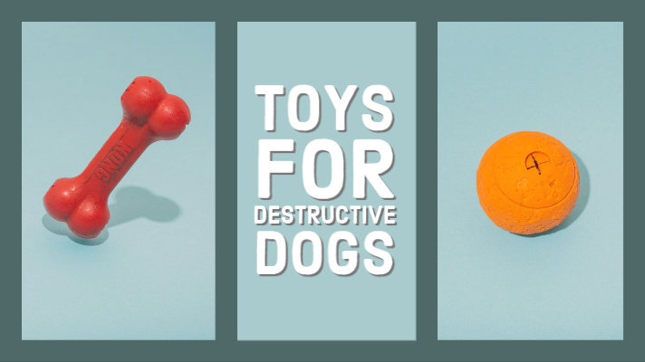 3 Toys for Destructive Dogs Tested by A Staff Member Pet