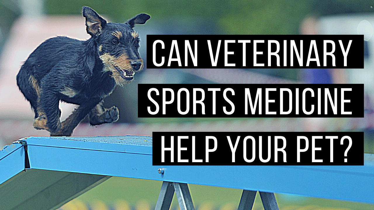 What does sports medicine look like in veterinary medicine
