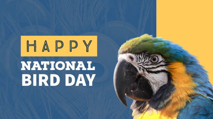 Happy National Bird Day!