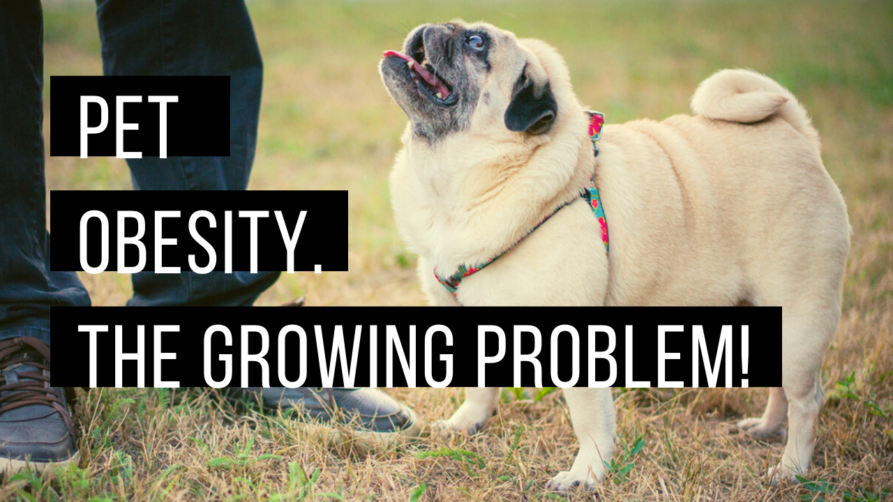 Pet Obesity. The Growing Problem.