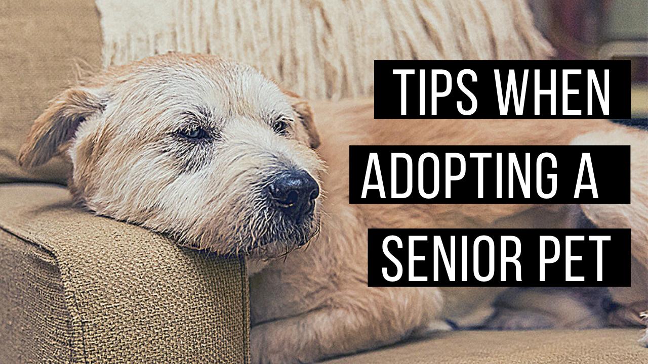 Adopting senior pets